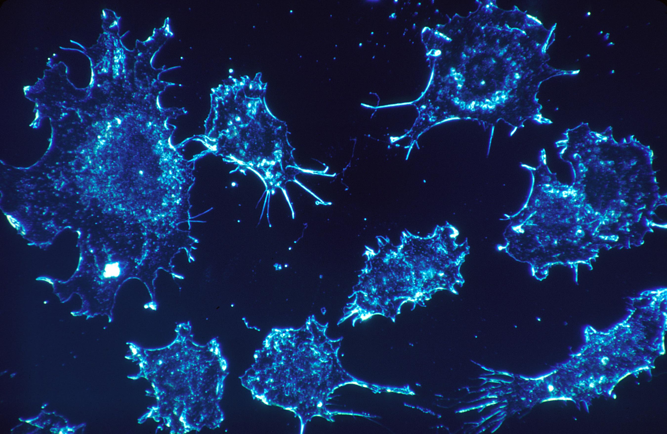 рак-очаквания-лечение