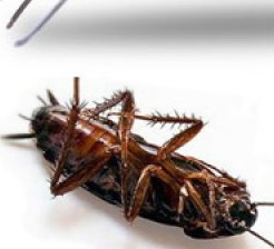 Как да се предпазим от хлебарки у дома?