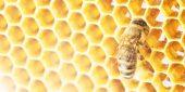 Една история за пчелите…