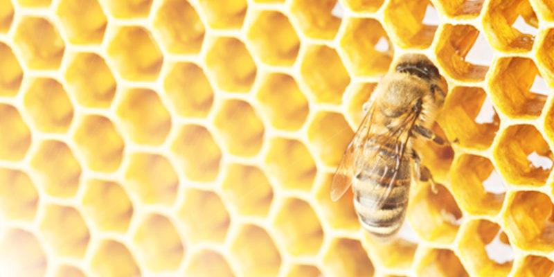 Една история за пчелите...