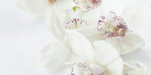 Доставка на любими цветя