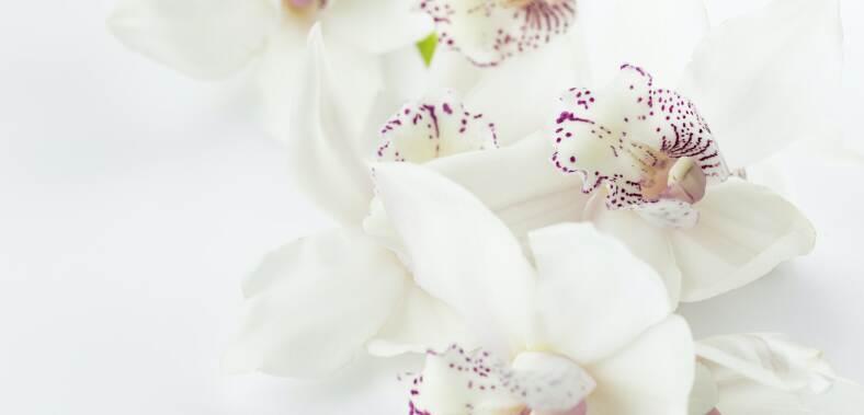 Какво издава любимото ни цвете за нас