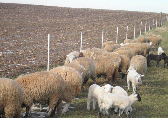 Електропастири в помощ на животновъдите